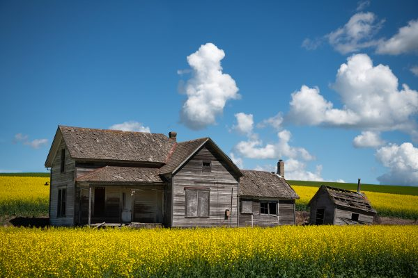 'Canola-Feilds-Around-Weber-House'-web