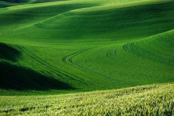 'Green-Lentil-Waves'-web
